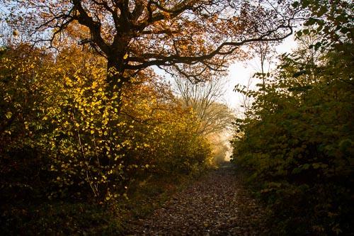 Waresley Wood in Autumn