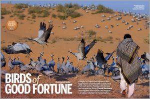 bbc-wildlife-cranes