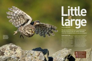 Little owl proof_Page_1