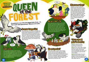 queen-of-the-forest
