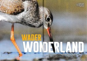 Article researched and written by Derek Niemann for the WWT members' magazine